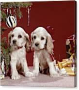 1960s Two Cocker Spaniel Puppies Canvas Print