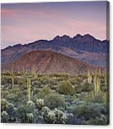 A Desert Sunset  Canvas Print