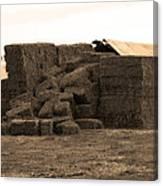 A Needle In A Haystack Canvas Print