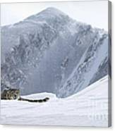 Absolute Solitude Canvas Print