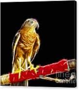 Accipiter Badius - Shikra Fractal Art Canvas Print