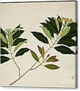 Album Of Drawings Of Plants Canvas Print
