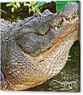 American Alligator Canvas Print