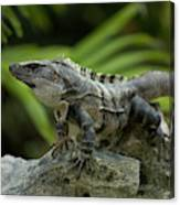 An Iguana Sunbathes In The Ancient Canvas Print