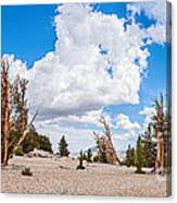 Ancient Panorama - Bristlecone Pine Forest Canvas Print