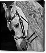 Andalusian Canvas Print
