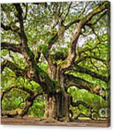 Angel Oak Tree Of Life Canvas Print