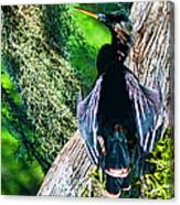 Anhinga On A Cyprus Canvas Print
