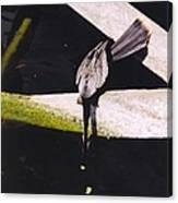 Anhinga Or Snake Bird Canvas Print
