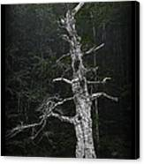 Anthropomorphic Tree Canvas Print