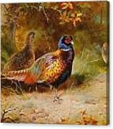 Autumn Covert Pheasants Canvas Print