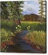 Arizona Stream  Canvas Print
