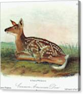 Audubon Deer Canvas Print