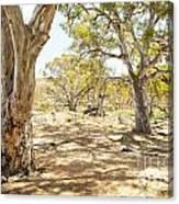 Australian Outback Oasis Canvas Print
