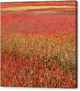 Autumn Blueberry Field Maine Canvas Print