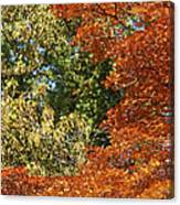 autumn colours in Bavaria Canvas Print