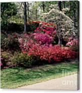 Azaleas And Dogwood Canvas Print