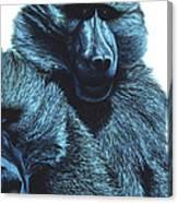 Baboons  Canvas Print