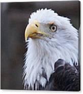 Bald-eagle-profile Canvas Print