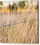 Barb Wire Country Fence Canvas Print