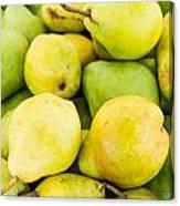 Bartlett Pears Canvas Print