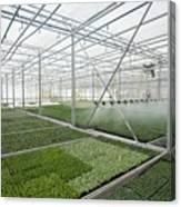 Bedding Plant Production Canvas Print
