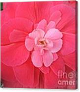 Begonia Named Nonstop Pink Canvas Print