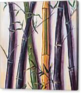 Black Bamboo Canvas Print