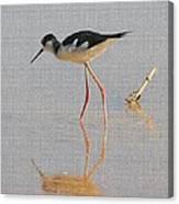 Black Neck Stilt Canvas Print