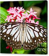 Blue Tiger Butterfly Canvas Print