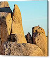 Boulders In A Desert, Joshua Tree Canvas Print
