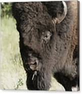 Buffalo Painterly Canvas Print