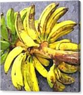 Bunch Of Banana Canvas Print