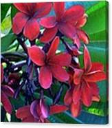 Burgundy Plumeria Canvas Print