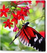 Butterfly On Red Bush Canvas Print