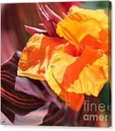 Canna Lily Named Durban Canvas Print