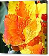 Cannas Canvas Print