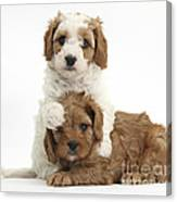 Cavapoo Puppies Hugging Canvas Print