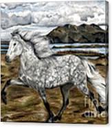 Charismatic Icelandic Horse Canvas Print