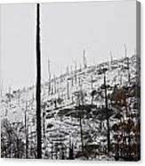 Charred Bones Of The Forest Canvas Print