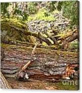 Cheakamus Rainforest Debris Canvas Print