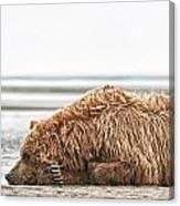 Coastal Brown Bear Picture  Canvas Print