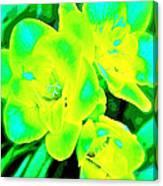 Color 16 Canvas Print