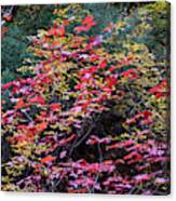 Colorful Leaves On A Tree Canvas Print