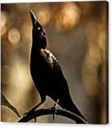 Common Grackle Canvas Print