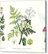 Common Poisonous Plants Canvas Print