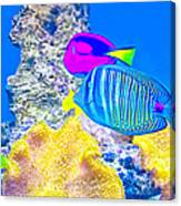 Coral Fishes Canvas Print