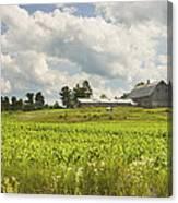 Corn Growing In Maine Farm Field Canvas Print