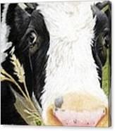 Cow No. 0652 Canvas Print