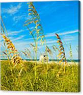 Crandon Park Beach Canvas Print